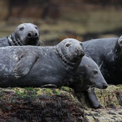 Some of our many seals